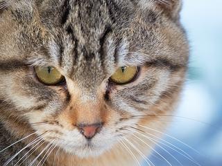 【斬新】ネコ専用インテリアをこのブログで見たら、あなたも試してみたくなるはず!
