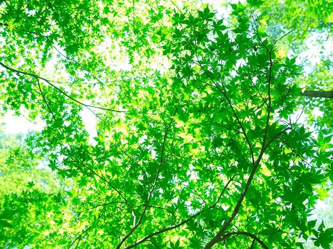 タマホーム「新・木麗な家」の特徴と評判