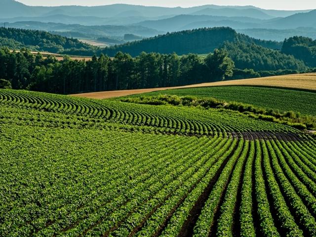 畑の上にソーラーパネル?「ソーラーシェアリング」で農作物と売電収入が!
