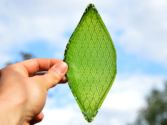 シルクで作成?光合成する人工の葉(バイオリーフ)が登場!用途は無限大!