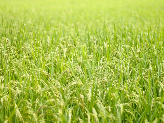 自然派が抱く究極の夢「田舎暮らし」!そんなに甘くない田舎暮らしの現実とは・・・